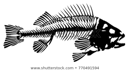 Skeletons Fishes stock photo © red2000_tk