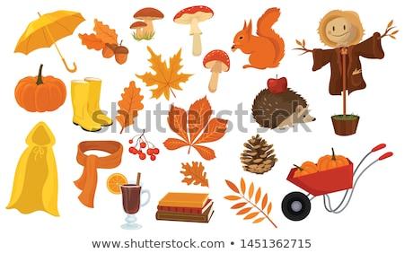 vector cartoon style set of autumn symbols stock photo © curiosity
