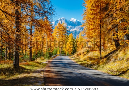 magical yellow larches location place dolomiti alps cortina d stock photo © leonidtit