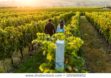 Couple in vineyard Stock photo © IS2