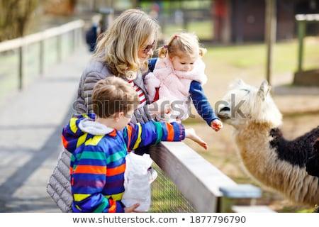 Kid Boy Pet Alpaca Stock photo © lenm
