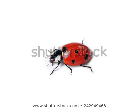 Ladybug on white background Stock photo © bluering