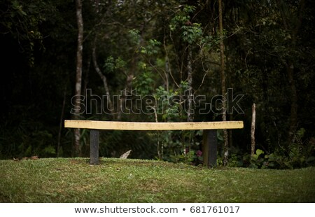 Benches in forest, Mt Kinabalu, Malaysia Stock photo © IS2