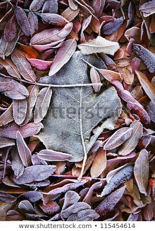 Dondurulmuş yaprakları zemin sonbahar yaprakları orman Stok fotoğraf © Juhku