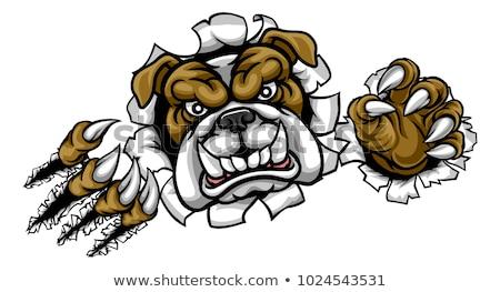 Stockfoto: Zwart · wit · boos · bulldog · hond · cartoon · mascotte · karakter