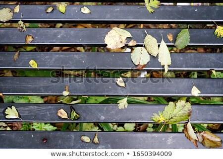 Vallen bladeren zwarte strips najaar vector Stockfoto © Artspace