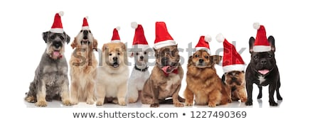 cute group of eight santa dogs sitting and standing stock photo © feedough