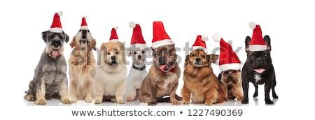 Сток-фото: Cute · группа · восемь · собаки · сидят