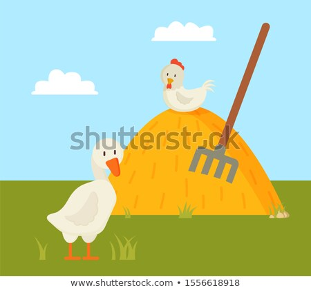 Rural Life Goose and Chick on Farm Yard Color Card Stock photo © robuart