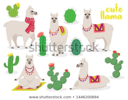 set of cute llamas in different poses desert with cactus stock photo © marysan