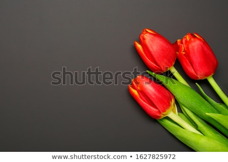Red tulips on black background. Empty space stock photo © Illia