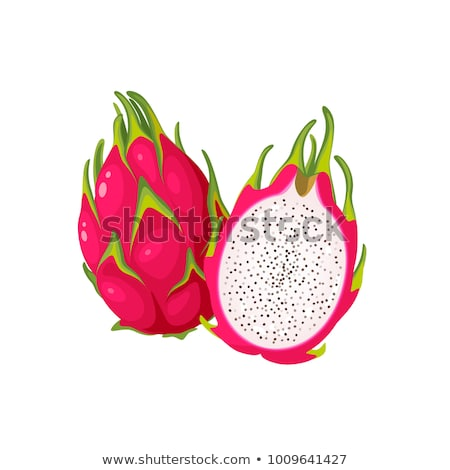 Pitaya Pitahaya Exotic Juicy Fruit Vector Isolated Stock photo © robuart