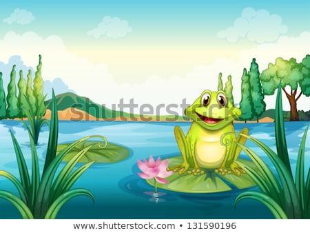 воды · Лилия · цвета · иллюстрация · цветы · зеленый - Сток-фото © colematt
