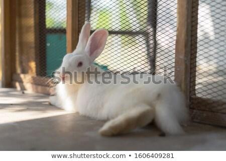 かわいい ウサギ ケージ 実例 自然 背景 ストックフォト © colematt