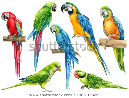 Coloring template with parrot bird Stock photo © colematt