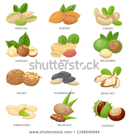 Chestnut Kernel and Peel Set Isolated Icons Vector Stock photo © robuart