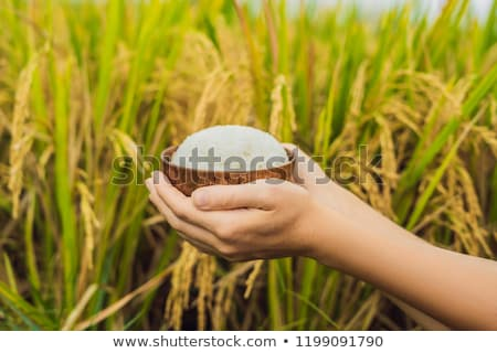 the hand holds a cup of boiled rice in a wooden cup against the background of a ripe rice field stock photo © galitskaya
