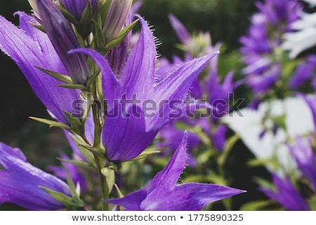 синий · красоту · букет · ярко - Сток-фото © alex9500