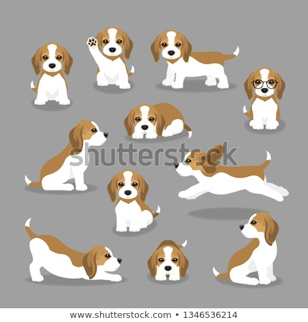 Beagle chien illustration fond art Photo stock © bluering