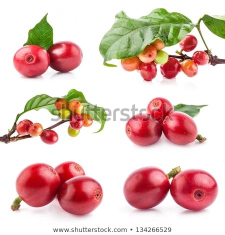 Vert rouge café semences herbe Photo stock © galitskaya