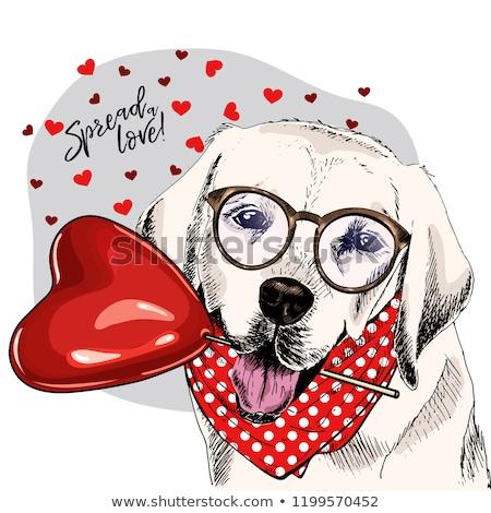 Labrador retriever meglepődött rajz rajz stílus illusztráció Stock fotó © patrimonio