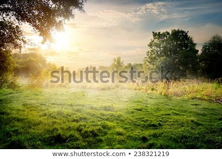 Erdő legelő zöld égbolt felhők természet Stock fotó © fyletto