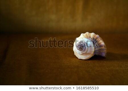 Marrón mar Shell arena playa primer plano Foto stock © vapi