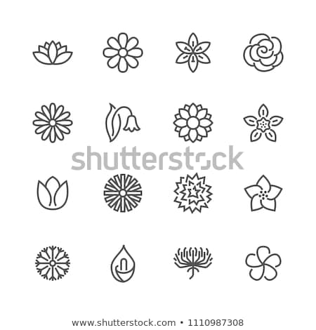 Manzanilla flor icono alimentos naturaleza Foto stock © bspsupanut