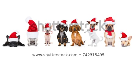 Christmas holiday. Santa Clauses in row with gifts Stock photo © LoopAll