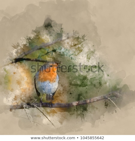 Portrait of a Robin Stock photo © scooperdigital
