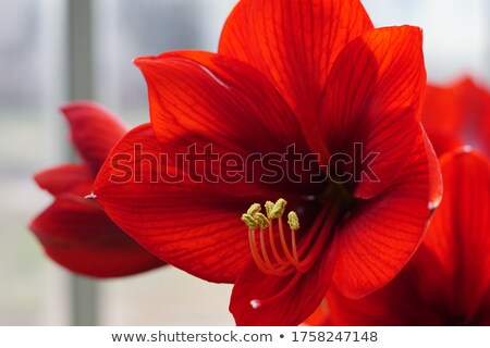 Fleur famille accent nature fond rouge Photo stock © Pietus