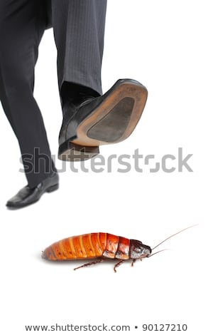 Businessman stepping on an insect Stock photo © photography33