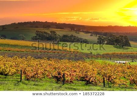 Vale imagem paisagem Austrália nuvens fruto Foto stock © magann