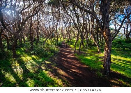 árboles · secar · amarillo · hierba · cielo · azul - foto stock © forgiss