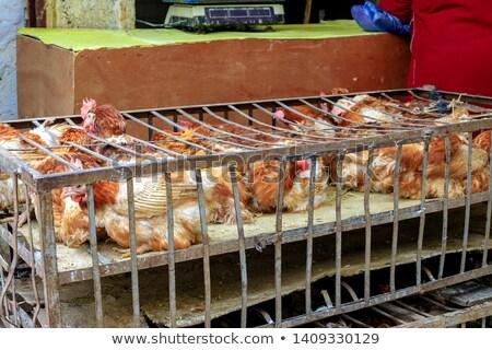 élő baromfi vásár piac Vietnam tyúk Stock fotó © michaklootwijk