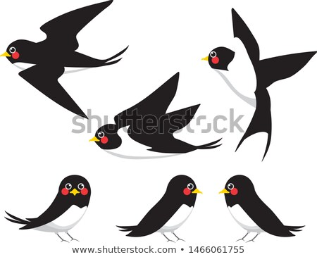 Bird swallow set. Vector illustration poses isolated on white. Stock photo © Hermione