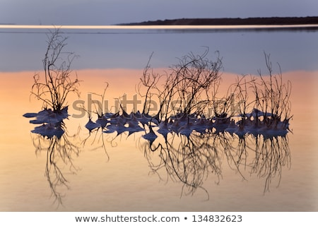 Bush dode zee dode gedekt zout ondiep Stockfoto © eldadcarin