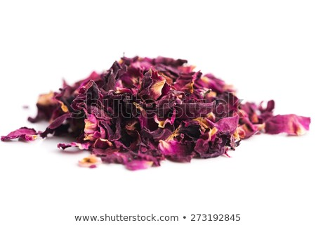 Natural tea from rose-petals on the background of rose bush Stock photo © Pruser