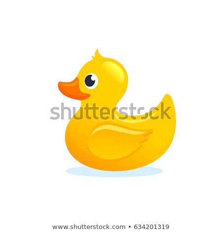 pato · primer · plano · cara · blanco · agua · aves - foto stock © ajt