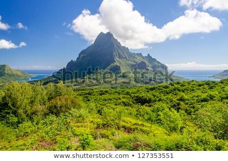 palms · floresta · areia · branca · praia · ilha · francês - foto stock © danielbarquero