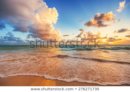 Hdr tiro exótico praia tropical praia árvores Foto stock © moses