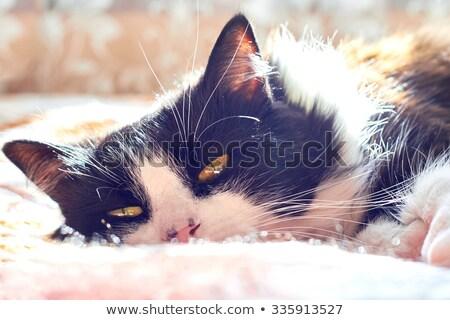 猫 · 行動 · キラー · 本能 · 国内の · 猫科の - ストックフォト © komar