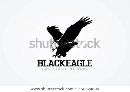 Vuelo negro águila vista lateral mascota identidad Foto stock © HunterX