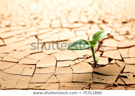 Foto stock: Plant In Dried Cracked Mud