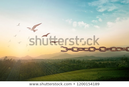 Spirit bird Stock photo © sahua