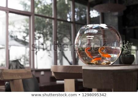 Goldfish Hotel Stock photo © tilo