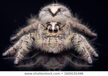 retrato · aranha · primavera · animal · belo · amarelo - foto stock © t3rmiit