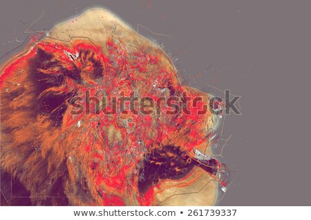 Chow Chow dog portrait. Abstract artwork Stock photo © Kirill_M