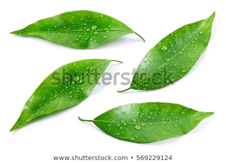 mandarijn- · huid · groen · blad · witte · isolatie · voedsel - stockfoto © tetkoren