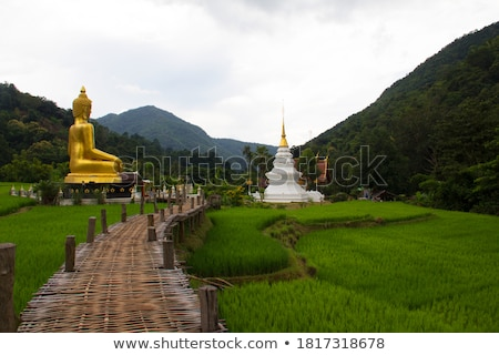 Mountain over Southeast Asian Agricultural Fields Stock photo © pzaxe